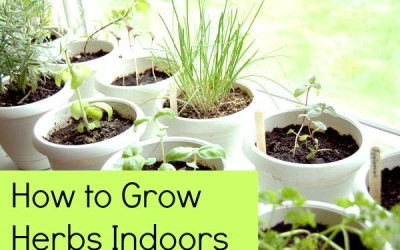 How to Grow Herbs Indoors: 5 Tips