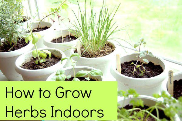 How to grow herbs indoors 5 tips - Best herbs to grow indoors ...