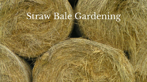 4 Things You Should Know About Straw Bale Gardening